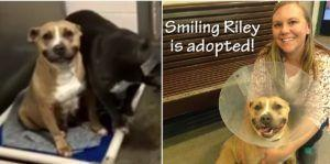 Shelter Dog Learns To Smile And Wins The Heart Of A Wonderful Adopter