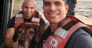 "Coast Guard Rescues ""Pup In Distress"" Found Swimming Out To Sea"
