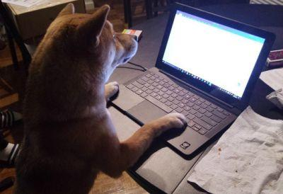 7 Dogs Who Are Mad On The Internet