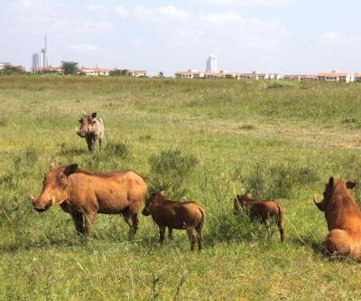 I went on an African safari - and saw feeding lions, baby giraffes, and overprotective warthogs