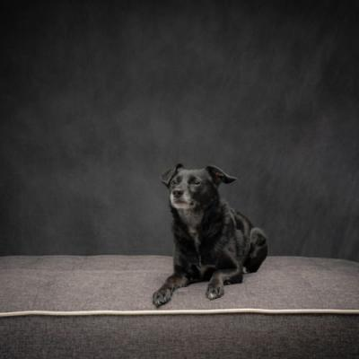 Allmixedpup: Lucy was very good for the camera I've started a
