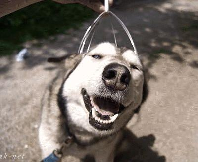 9 Huskies Who Put The Goof Into Goofball
