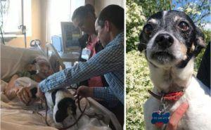 Doctor Grants Patient's Dying Wish To See Her Dog One More Time