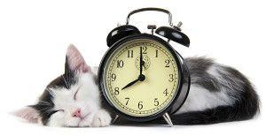 Alarm Clock Kitties