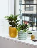 "Turn Your Dorm Room Into a Sanctuary With These 51 ""Easy-Growing"" House Plants"