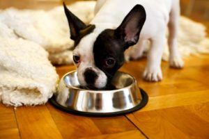 7 Common Mistakes People Make When Storing Their Dog's Food