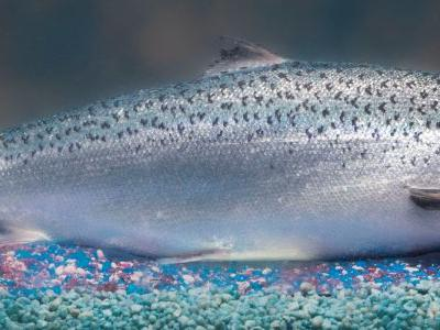 FDA Approval of GE Salmon Paves Way for Sustainable Food Innovations