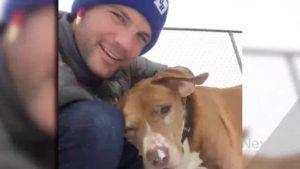 Deaf Senior Dog With Cancer Gets Adopted By Handsome Man & Their Story Goes Viral