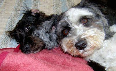 Coconut Oil for Dogs: How it Cured My Dog's Itchy Skin