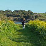 Research and Birding at Elkhorn Slough