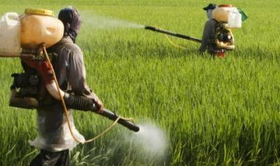 Explosive new analysis reveals that farmers are spraying glyphosate on crops right before harvest