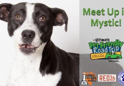 GoPetFriendly Meet Up in Mystic, CT on June 10th!