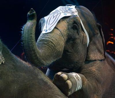 Illinois and New York Pass First Statewide Bans on the Use of Elephants in Entertainment
