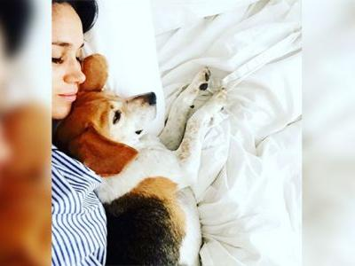 Meghan Markle Is Getting Barked at Online for Abandoning Her Pup in Canada