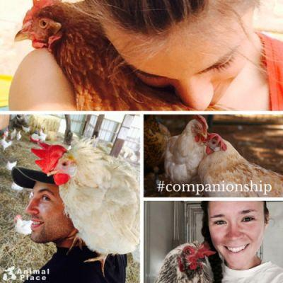 Chickens are companions, not food! Want to join the fun? Apply