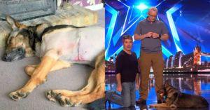Stabbed Police Dog Reveals Unbelievable Skill on Britain's Got Talent