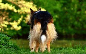 "5 Ways To Manage ""Poop Butt"" In Long-Haired Dogs"