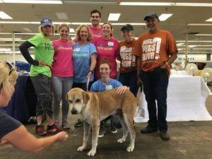 Renee Zellweger Donates Her Time In Texas Helping Dogs Affected By Harvey