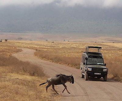 Experience a Safari on a Luxe Game Reserve with Great Food