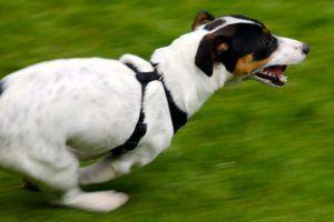 Ask A Vet: Why Are Some Dogs More Hyper Than Others?