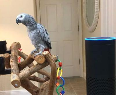 Parrot Sounds Pretty Pleased With Her Mastery Of Amazon Echo