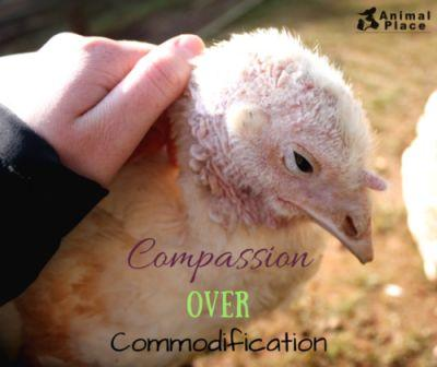 Choose compassion, nonviolence, and empathy over