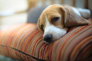 OTC Human Medications For Your Dog - Here's What You Need To Know