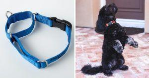 The Best And Worst Dog Collars Ranked