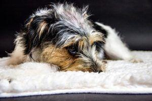 8 Subtle Signs Your Dog Is In Pain