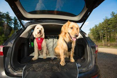 10 Questions to Ask Yourself Before Bringing a New Dog Home