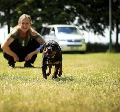 Training A Rottweiler Is Done Best With An Iron Hand And Some Tasty Treats
