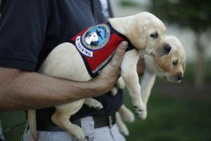 New TSA Adoption Program Gives K9 Dropouts A Chance To Find Good Homes
