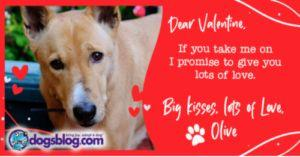Shelter Dogs Write Pleading Valentines: Won't You Be Mine?