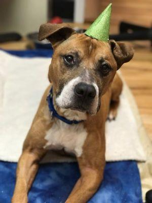Abandoned, Abused Dog is Ready for a New Home