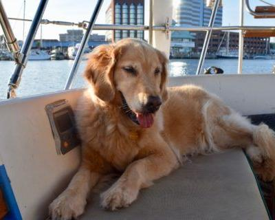 Taking Your Dog On A Boat? Ask These 5 Questions First
