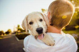 8 Best Summer Pet Products And Services You Need To Know About