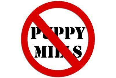 Bainbridge Island is First City in Washington to Ban Pet Sales from Puppy Mills