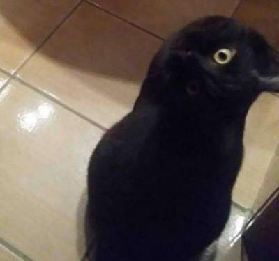 This photo of a crow - or is it a cat? - is going viral on Twitter, and people are seriously confused
