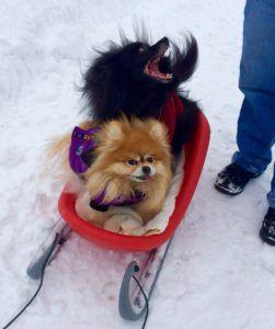 Snow Dogs: 10 Breeds Who Were Made to Love Cold Weather