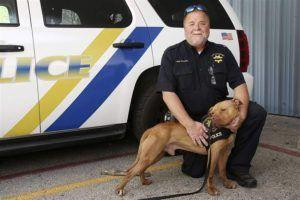 Unadoptable Dog Becomes Ohio's First Pit Bull Police K9