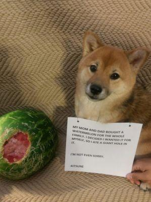 I got a Watermelon Instead! We bought a watermelon, set it on
