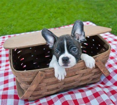 How to Take Your Dog to a Summer Picnic