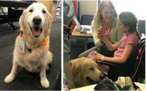 Children's Hospital Therapy Dog Retires After An Incredible 11 Years Of Service