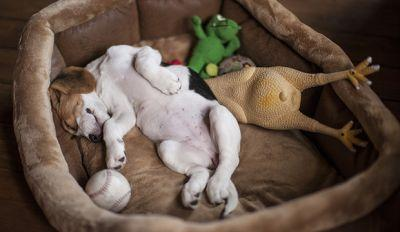 Dog Equipment 101: Dog Bedding Ideas And Tips