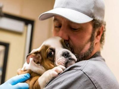 One-Of-A-Kind Shelter Helps Heal The Country's Most Emotionally Damaged Dogs