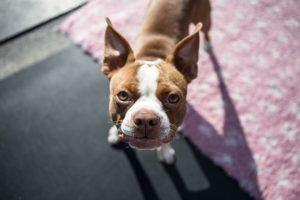 5 Ways To Calm Your Hyperactive Dog