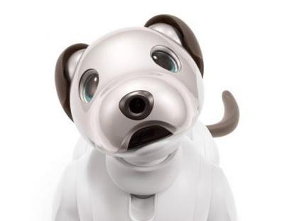Sony aibo is back: 5 things to know