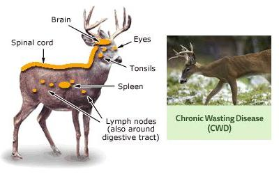 European agency reports on chronic wasting disease, TSE cases