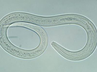 Top Veterinary Articles of the Week: Hookworms, Vaccines, and more