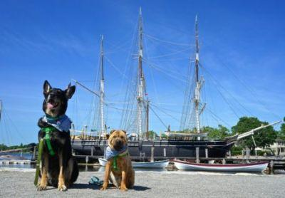 Connecticut's Top Pet Friendly Attraction: Mystic Seaport